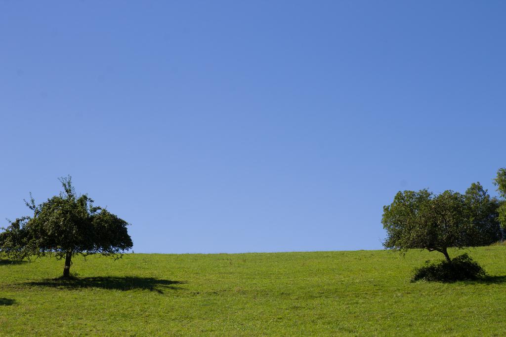Zwei Bäume die sich aus der Entfernung zueinander neigen